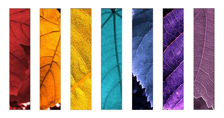 Осень-зима 2011/12
